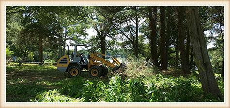 emergency-tree-service-virginia-beach