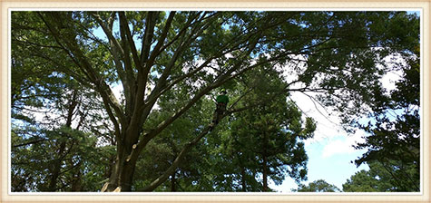 tree-pruning-virginia-beach
