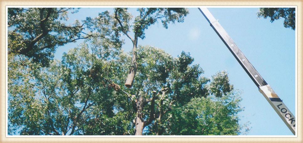 crane-service-virginia-beach