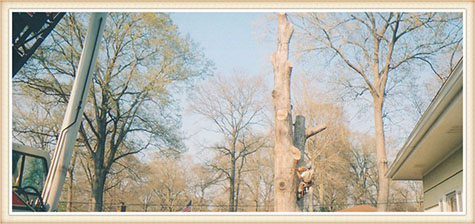 tree-removal-virginia-beach-va
